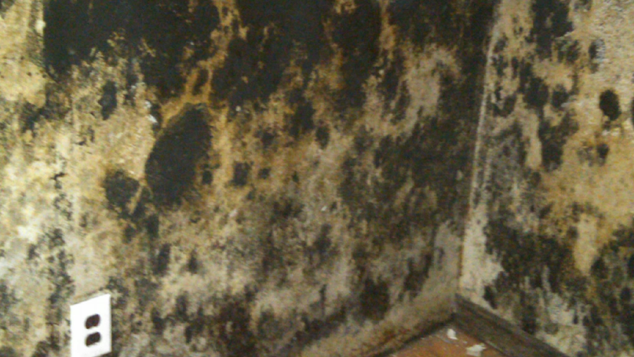 Mold Removal Maryland